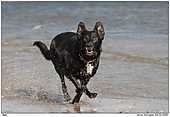 Dog - Fun at the beach