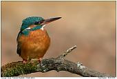 Kingfisher - Kingfisher