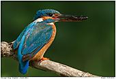 Kingfiher - Kingfisher