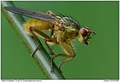 Dung Fly - Dung Fly