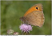 Meadow Brown - Meadow Brown