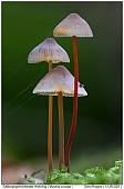 Saffondrop Bonnet - Saffrondrop Bonnets