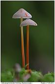 Saffrondrop Bonnet - Saffrondrop Bonnet