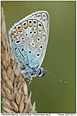 Common Blue - Common Blue
