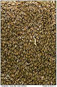 Honey Bees - Honey Bees