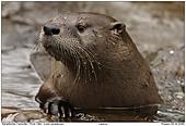 River Otter - River Otter