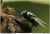 Greenbottle - Greenbottle
