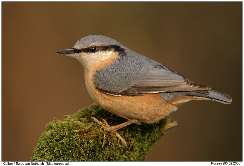 nuthatch photos digital nature photography photo nuthatch images image pics. Black Bedroom Furniture Sets. Home Design Ideas