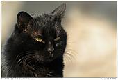 Cat - Savaged Cat