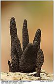Dead Moll's Fingers - Dead Moll's Fingers
