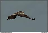 Bzzard - Buzzard - Flight Shot