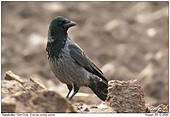 Dun Crow - Dun Crow
