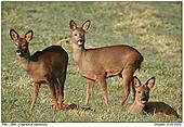 Deer - Deers In The Winter