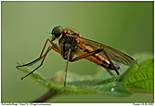 Snipe Fly - Snipe Fly
