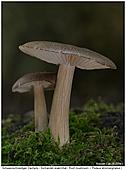 Roof Mushroom - Roof Mushroom