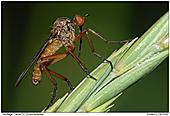 Dance Fly - Dance Fly