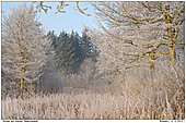Winter in Flarupgaard / Northern Germany - Winter in my macro-meadow