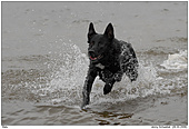 Dog - Balu - Fun in the water