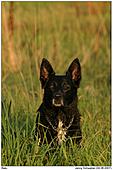 Dog - Balu