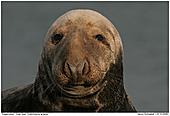 Gray Seal - Gray Seal